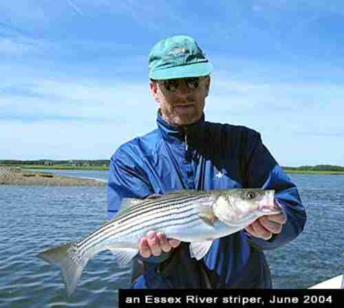 Chasalow and Striped Bass, Conomo Point, Essex/Gloucester, Massachusetts, 2004.